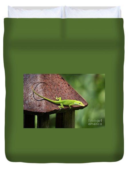 Lizard On Lantern Duvet Cover by Stephanie Hayes