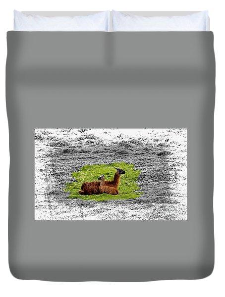 Llamas At Ingapirca Duvet Cover