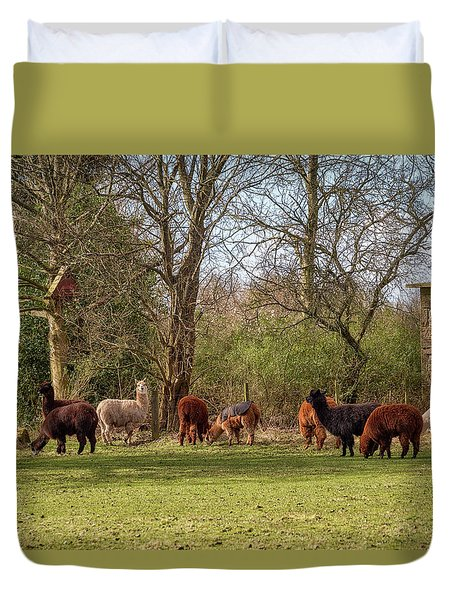 Duvet Cover featuring the photograph Alpacas In Scotland by Jeremy Lavender Photography