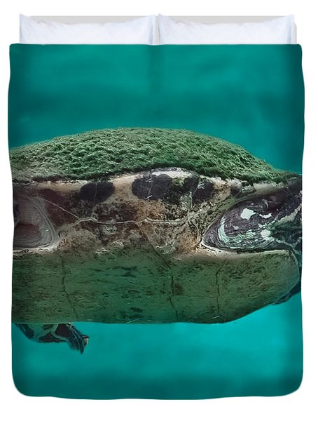 Loggerhead Plastron Duvet Cover by DigiArt Diaries by Vicky B Fuller