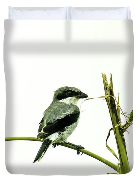 Duvet Cover featuring the photograph Loggerhead Shrike And Mantis by Robert Frederick
