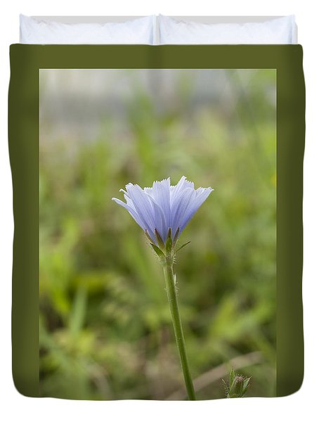 Lone Chicory Blossom Duvet Cover