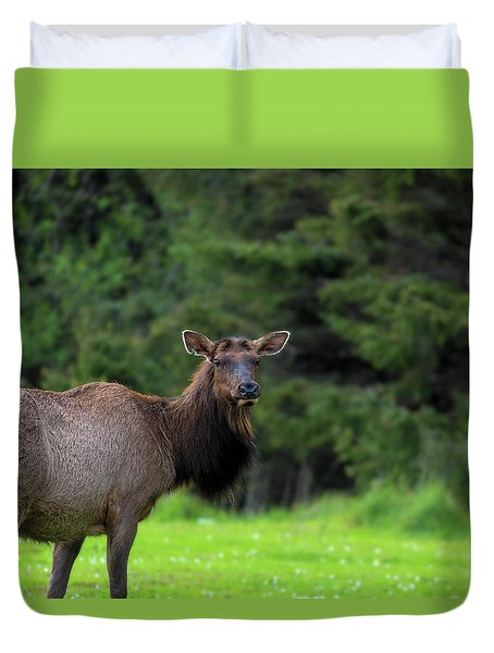 Lone Elk At Ecola State Park Duvet Cover