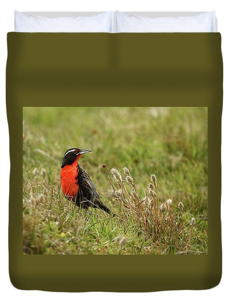 Long-tailed Meadowlark Duvet Cover by Bruce J Robinson