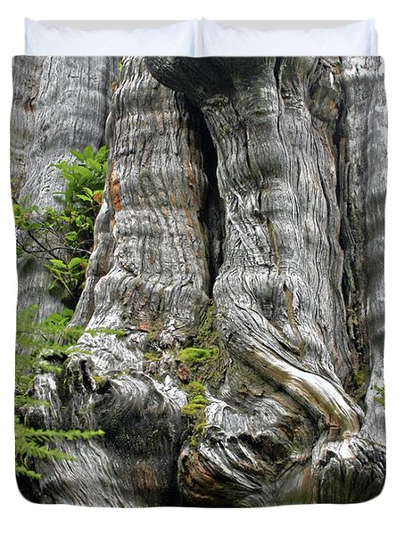Long Views - Giant Western Red Cedar Olympic National Park Wa Duvet Cover by Christine Till