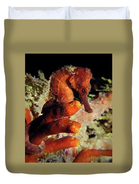 Longsnout Seahorse, St. Croix, U.s. Virgin Islands 2 Duvet Cover