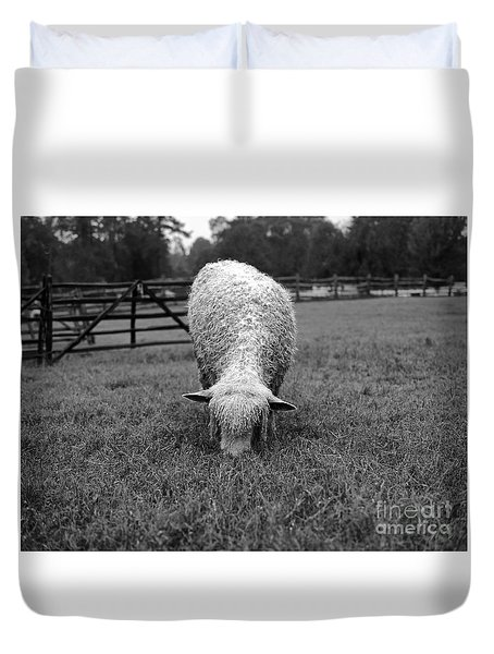 Longwool Sheep Grazing Duvet Cover