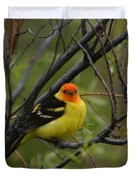 Looking At You - Western Tanager Duvet Cover