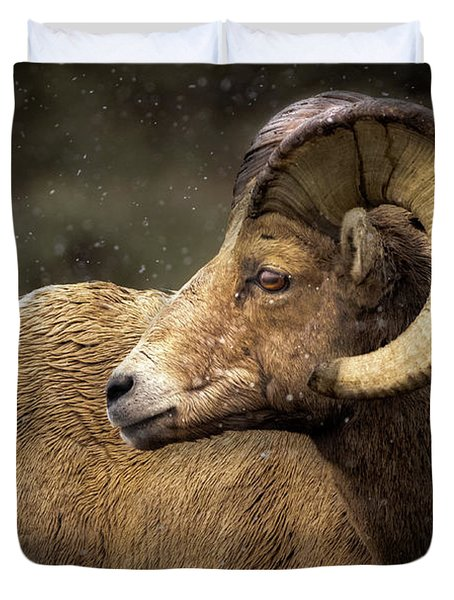 Looking Back - Bighorn Sheep Duvet Cover