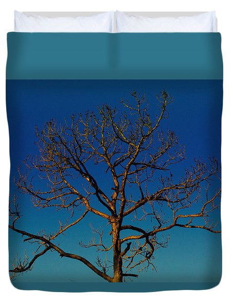 Looking Up, Sunrise, Myakka State Forest Duvet Cover