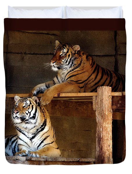 Lounging Tigers 2 Duvet Cover