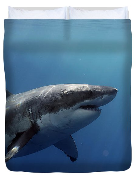 Lucy Posing At Isla Guadalupe Duvet Cover by Shane Linke