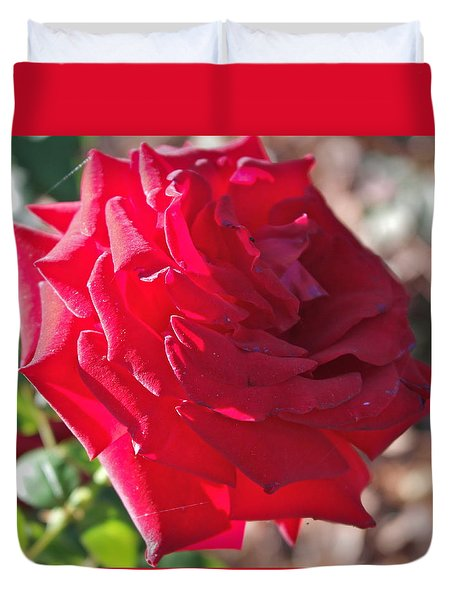 Duvet Cover featuring the photograph Luminous Red Rose Morning  by Michele Myers
