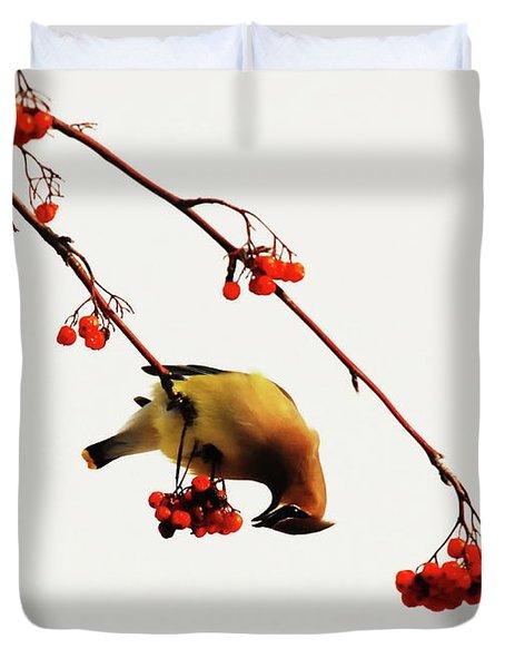 Lunchtime - Cedar Waxwing Duvet Cover