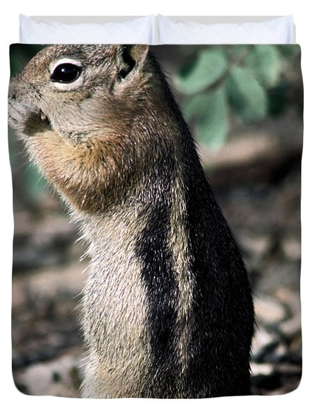 Lunchtime For Ground Squirrel Duvet Cover by Sally Weigand