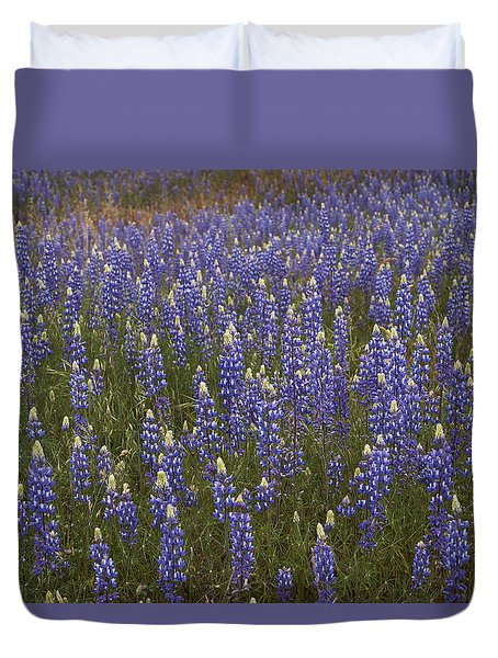 Lupines Duvet Cover by Doug Herr