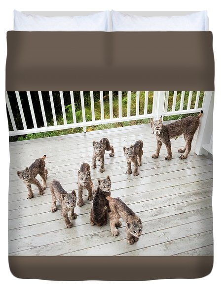 Lynx Family Portrait 11x14 Duvet Cover