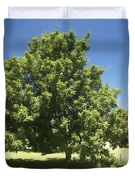 Macadamia Nut Tree Duvet Cover by Kicka Witte - Printscapes