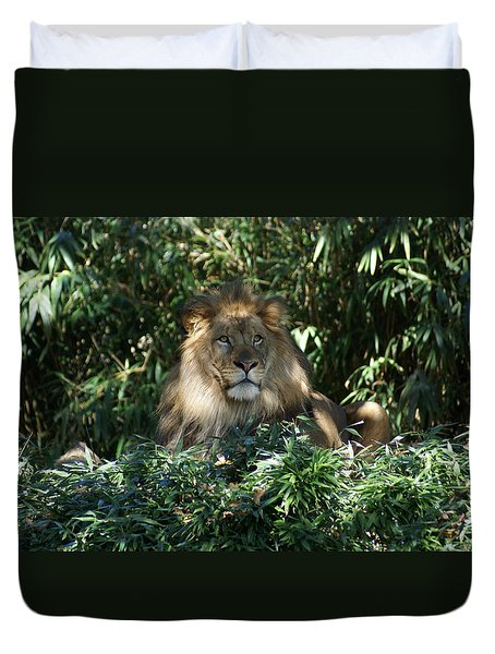 Magestic Lion Duvet Cover by Heidi Poulin