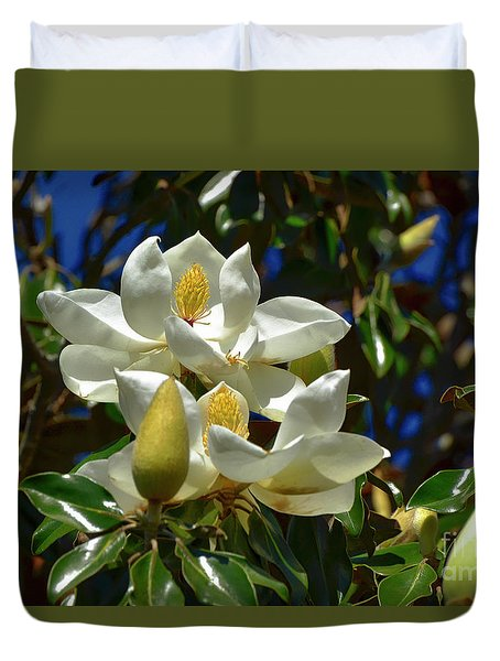 Magnolia Blossoms Duvet Cover by Kathy Baccari