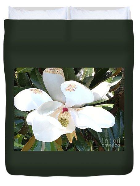Magnolia Tree Bloom Duvet Cover by Debra Crank