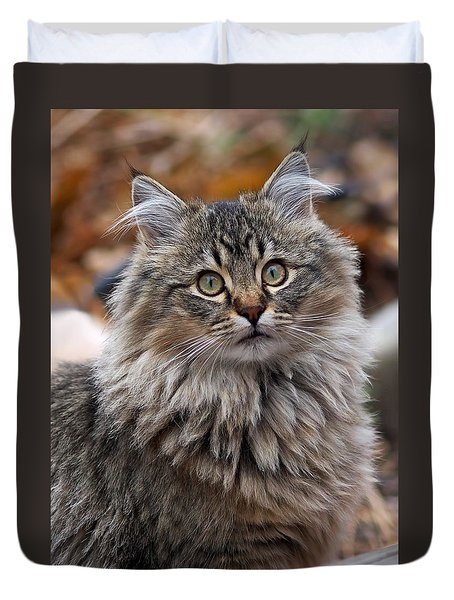 Duvet Cover featuring the photograph Maine Coon Cat by Rona Black
