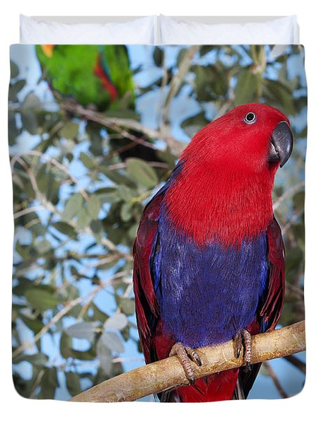 Male And Female Eclectus Parrot Duvet Cover