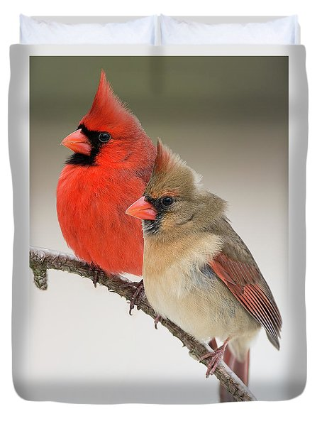 Male And Female Northern Cardinals On Pine Branch Duvet Cover