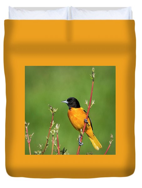 Male Baltimore Oriole Posing Duvet Cover