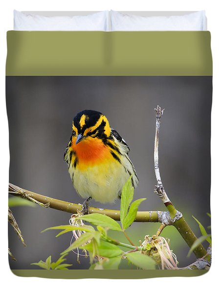 Duvet Cover featuring the photograph Male Blackburnian Warbler by Gary Hall