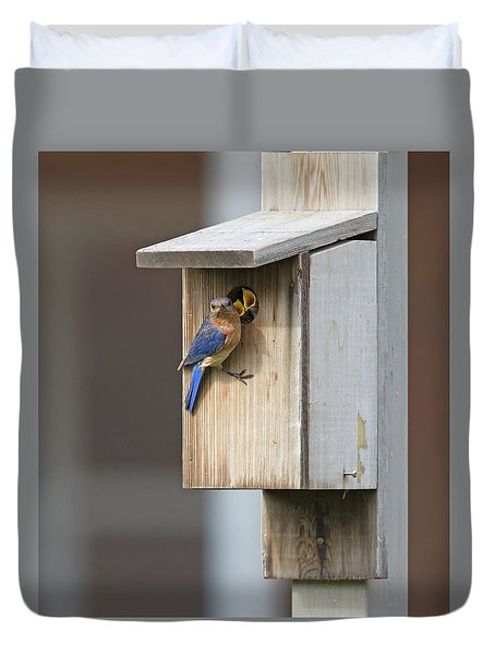 Male Bluebird And Babies Duvet Cover
