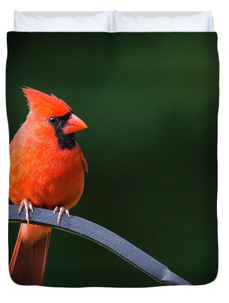 Male Cardinal At The Feeder Duvet Cover