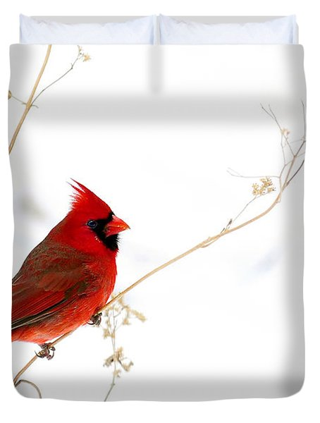 Male Cardinal Posing In The Snow Duvet Cover