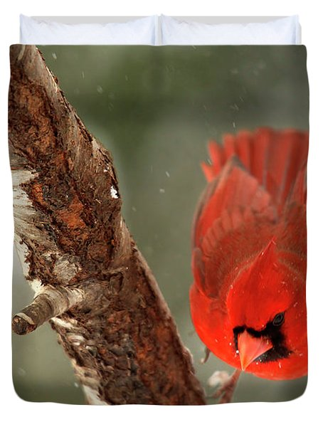 Duvet Cover featuring the photograph Male Cardinal Take Off by Darren Fisher