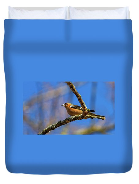 Male Common Chaffinch Bird, Fringilla Coelebs Duvet Cover