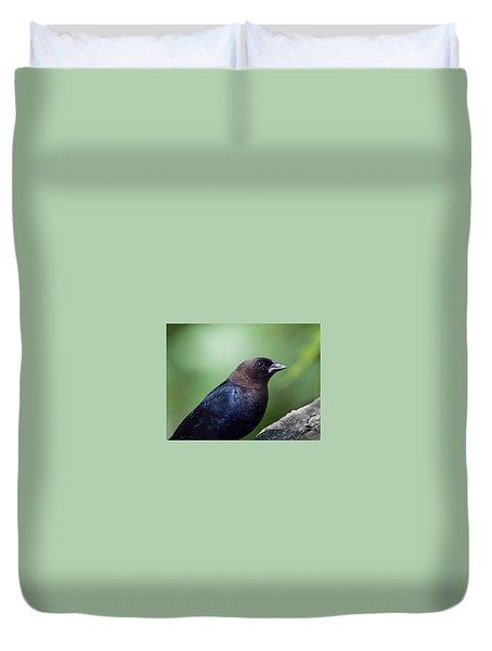 Male Cowbird Duvet Cover