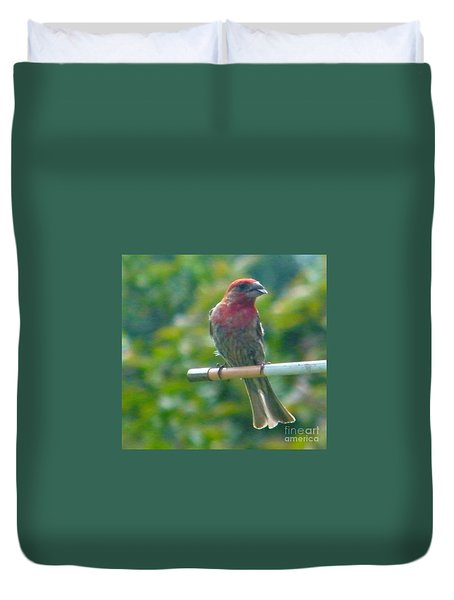 Male Crossbill With Sunflower Seed    August  Indiana Duvet Cover