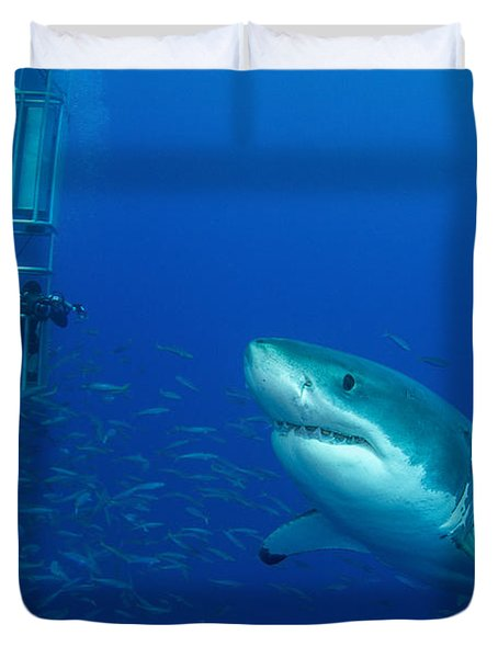 Male Great White Shark And Divers Duvet Cover