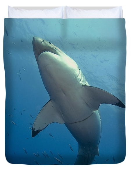 Male Great White Sharks Belly Duvet Cover by Todd Winner