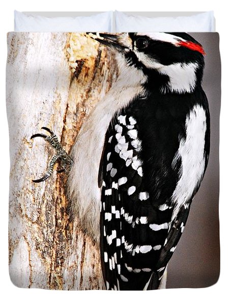 Male Hairy Woodpecker Duvet Cover by Larry Ricker
