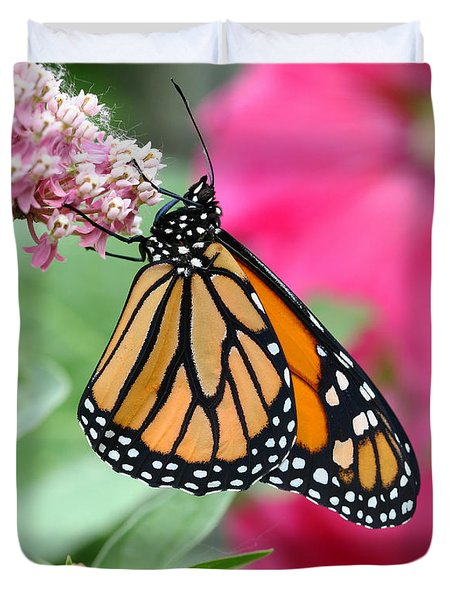 Male Monarch Duvet Cover by Steve Augustin