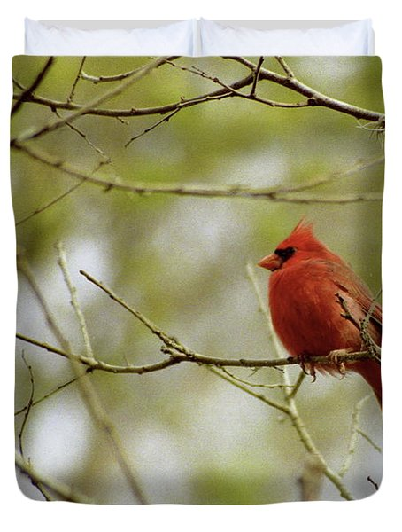 Male Northern Cardinal Duvet Cover by Michael Peychich