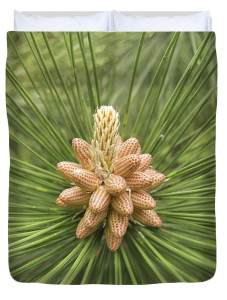 Male Pine Cones  Duvet Cover by Michael Peychich