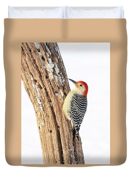Male Red-bellied Woodpecker Duvet Cover by Paul Miller