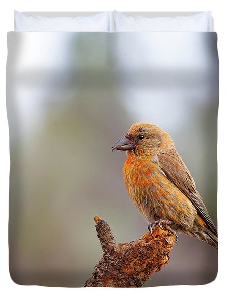 Male Red Crossbill Duvet Cover