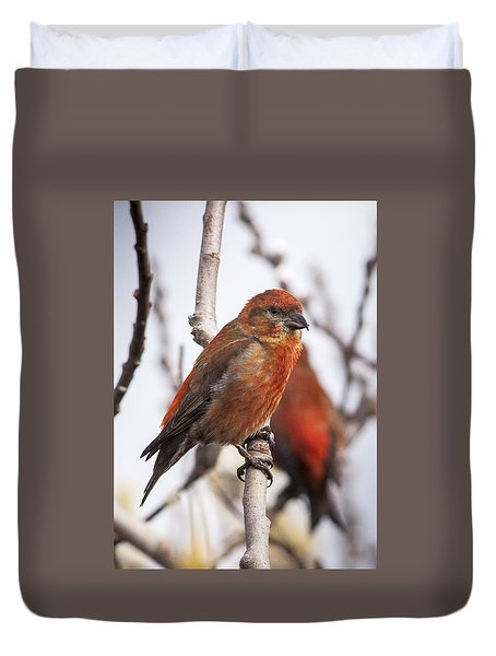 Male Red Crossbills Duvet Cover
