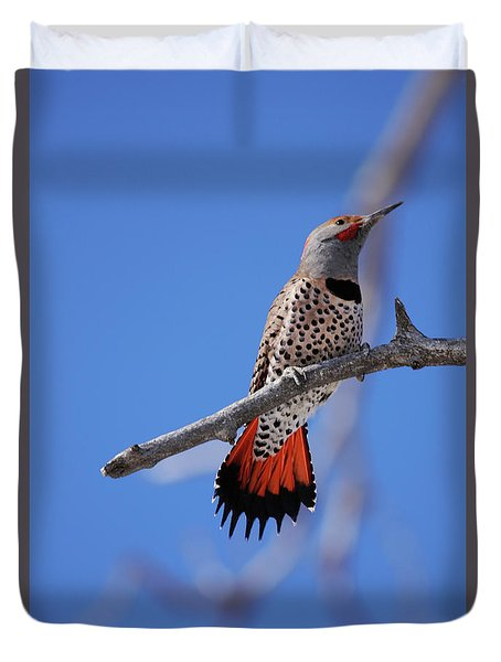 Male Red Shafted Northern Flicker Duvet Cover