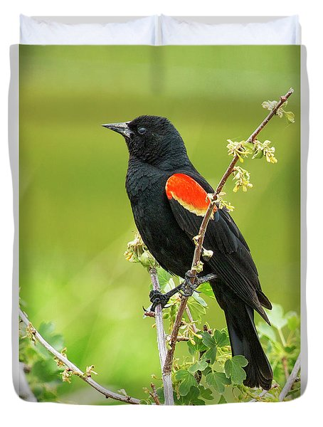 Male Red-winged Blackbird Duvet Cover