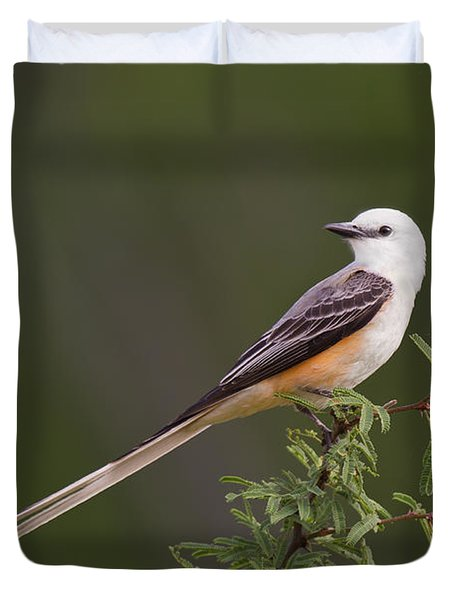 Male Scissor-tail Flycatcher Tyrannus Forficatus Wild Texas Duvet Cover