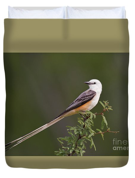 Male Scissor-tail Flycatcher Tyrannus Forficatus Wild Texas Duvet Cover by Dave Welling